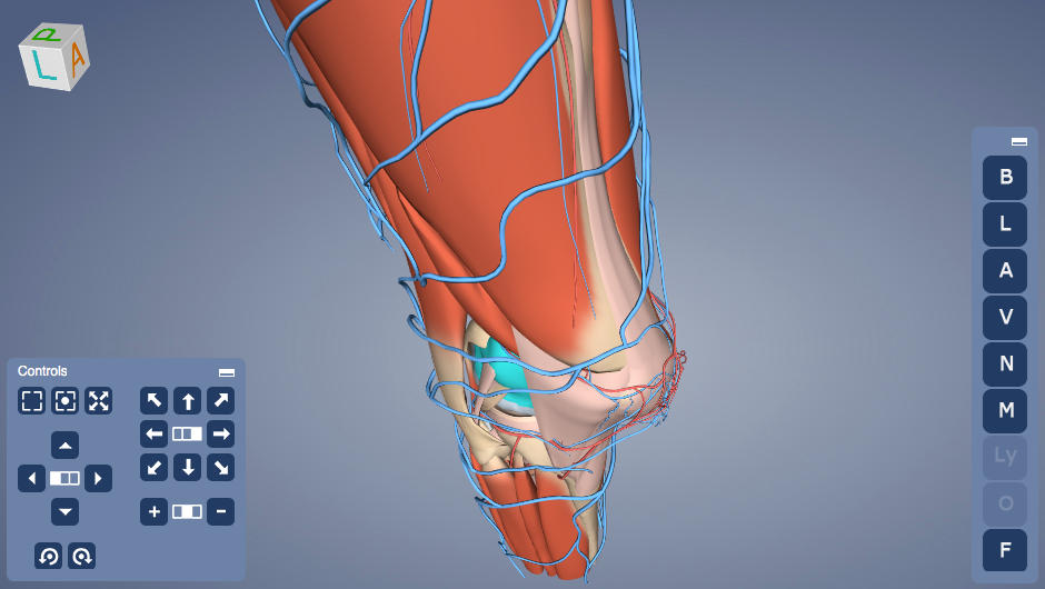 Anatomy Viewer | Away Studios