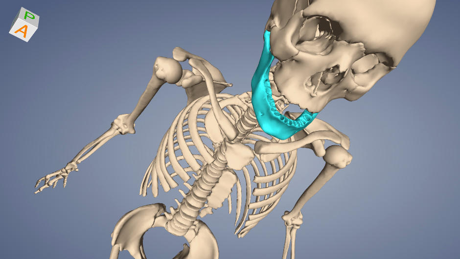 Anatomy Viewer